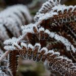 Frost_Winter