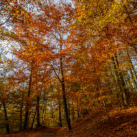 Hassberge Herbst